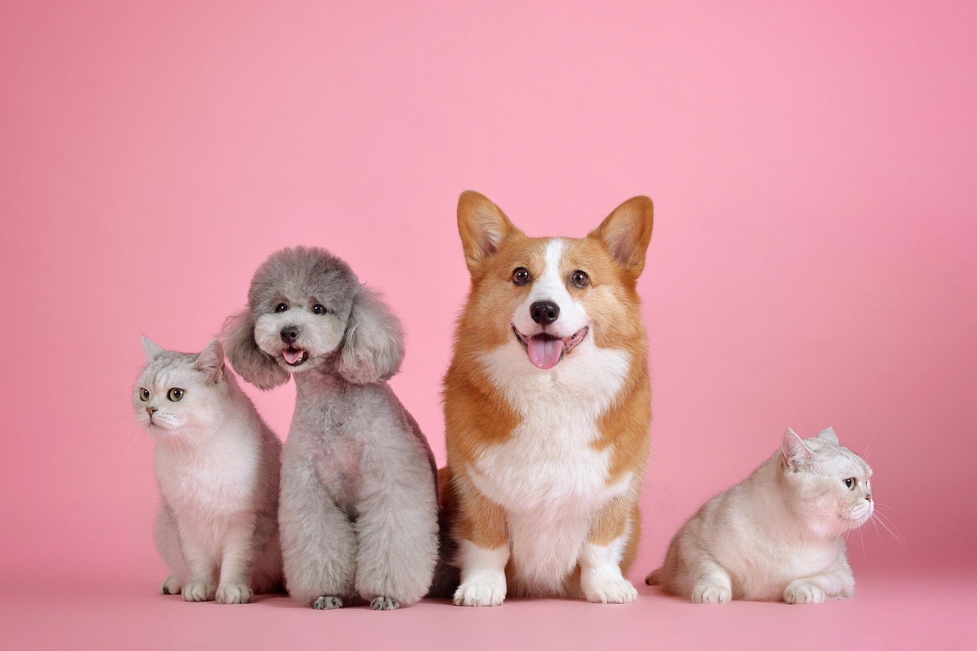 Tips to Increase Your Pet Food Sales