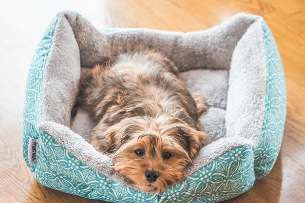 Health and Wellness Trending Issues in the Pet Space